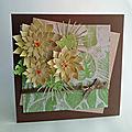 Succulentes...