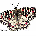 IMAGES <b>PAPILLONS</b>