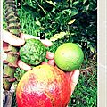 °oo devinette: les fruits de madagascar oo°