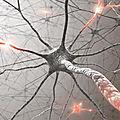 Génétique. Autisme : une <b>anomalie</b> génétique pourrait constituer une cible thérapeutique