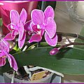 Mes orchid