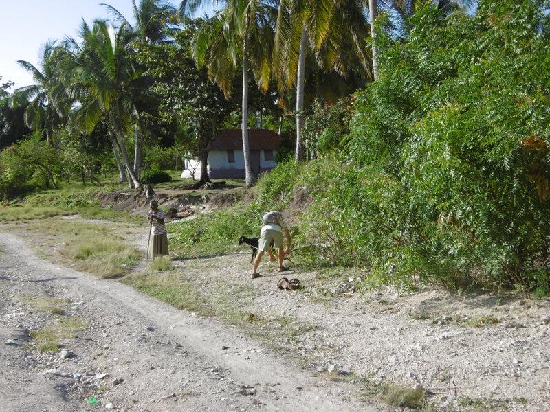 Haiti - Ile à Vaches (10)
