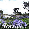 Ile de <b>Bréhat</b> - Island of Flowers,