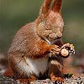 Un écureuil de feuilles avec zoé13, 10 inscrite