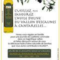 L'huile d'olive du vallon