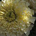 Avranches_aug10_fleurs4