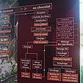 l_histoire_du_cacao_et_du_chocolat