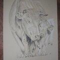 Portrait animalier au crayon