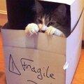 Mon chat m'a dit : j'aime ma boîte !