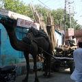 Jodhpur 761