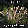 Seeds Of