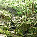 le jardin de rochers | rock garden