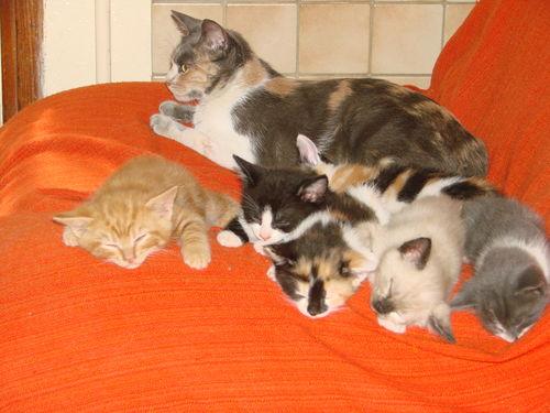 2008 04 26 Papillon avec plusieurs de ses chatons qui dorment