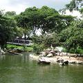 Jurong birds park 177