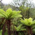 13 Nouvelle Zelande