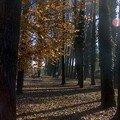 L'éclair me dure ; en automne