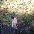 Le Djésus, pendu à un fil d'eau