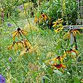biodiversite_3 (1)