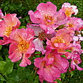 La rose Yann <b>Arthus</b> Bertrand