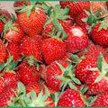 Miam les belles fraises!