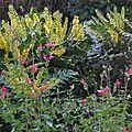 Au jardin ... avec les oiseaux