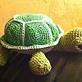Petite tortue profil droit