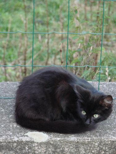 2008 09 17 Le chaton noir angoras