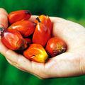 L'huile de palme et le bio, pouah! {mon jp-coffe'out}