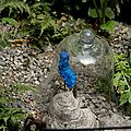 jardin bleu d absolem 5