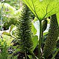 les chasseurs de plantes de jardin