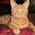 Ramses the cat