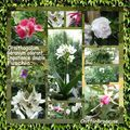 Mosaïque Fleurs coté nature 30 05 08