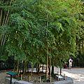 bambouseraie (11)