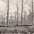 13 Mars 1918