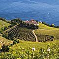 Vignoble en terrasses (txakoli), getaria.