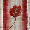 Hortensia en Cadre Osier rouge 40x30cm
