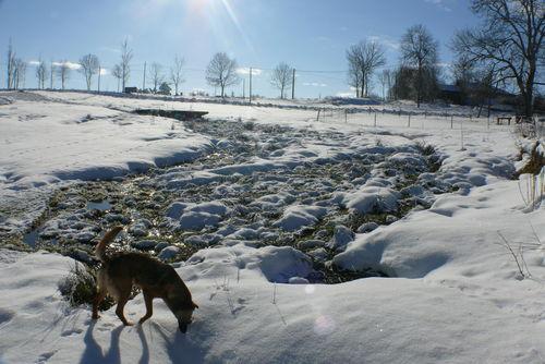 2008 12 28 La neige fond dans les narces