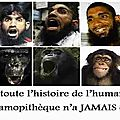 islam singes humour ps vallses-singes-4b895b0