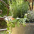 Côté jardin...