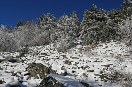 2008 11 27 Au pied du Lizieux, neige et soleil
