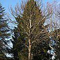 Nos <b>arbres</b> en février