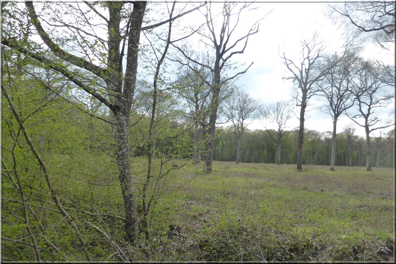 Geocaching foret d'Orleans (21)