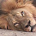 Cecil, le