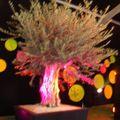 Parc Expo2010-Foli'Flore § bonsai (17)