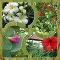 Fleurs de Thanjavur