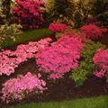 Floralies 071