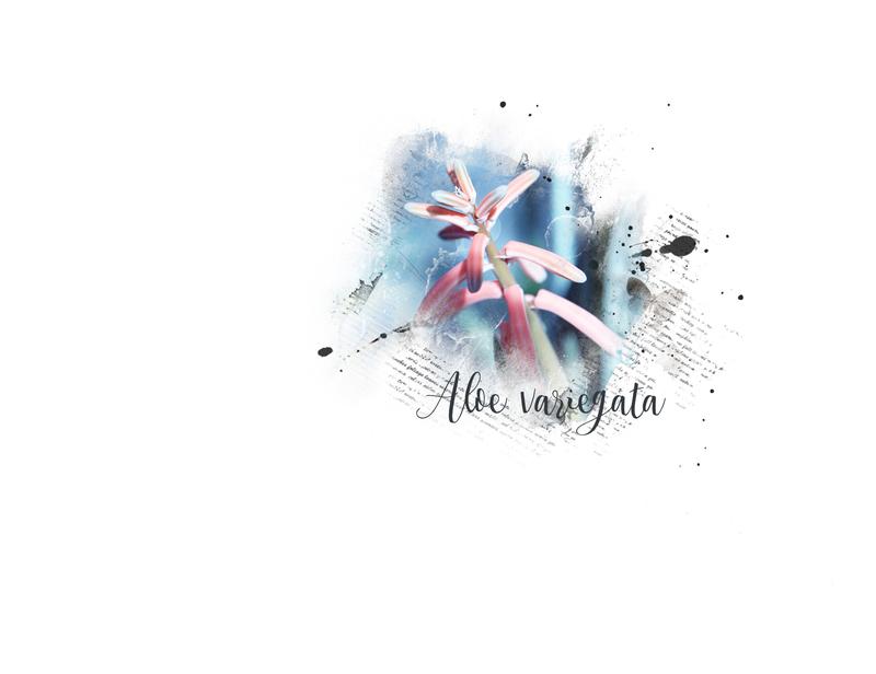 Aloe-Marleen
