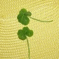 Four leaf shamrock (episode 2)