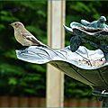 ♥ les oiseaux sont de retour au jardin du bonheur - edit ♥