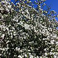 Le printemps dans mon jardin et chez ravenelle...